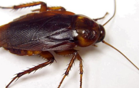 Administration discover cockroach infestation in vending machines