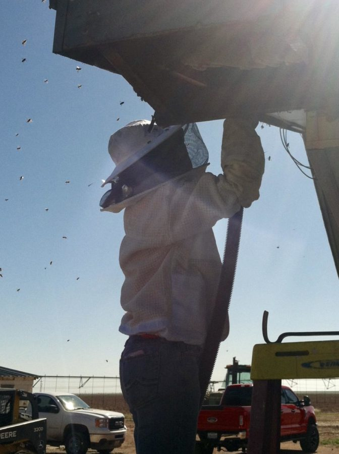 Mrs. Allen, Randall's Queen bee: Algebra teacher rescues and shelters bees